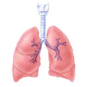 Lung Statistics