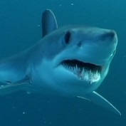 Shark Attack Fatalities