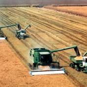 U.S. Agriculture Statistics