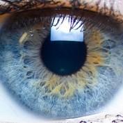 Eye Color Distribution Percentages