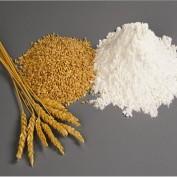 Gluten / Celiac Disease Statistics