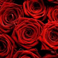 Valentines Day Statistics