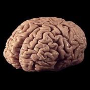 Human Brain Statistics