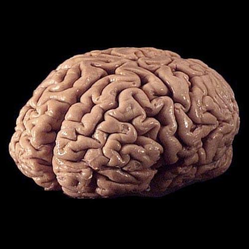 human brain statistics – statistic brain, Human Body