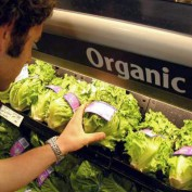 Organic Food Statistics