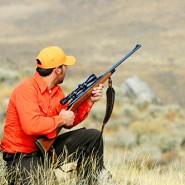 Hunting Statistics