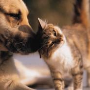 Animal Shelter Statistics