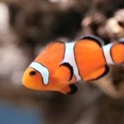 Fish Statistics
