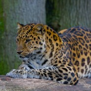 Endangered species statistics