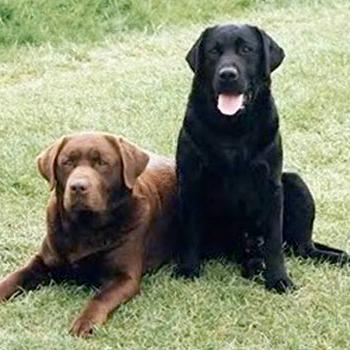 Most Popular Dog Breeds In Australia Statistics