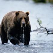Bear Attack Statistics
