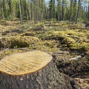 Tree deforestation statistics